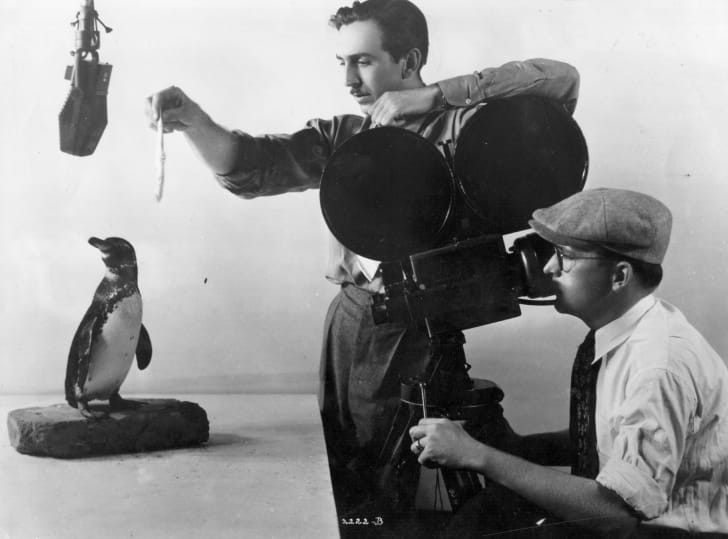 Walt Disney trying to coax a penguin into performing for the camera, for a 'Silly Symphony' entitled 'Peculiar Penguins'.