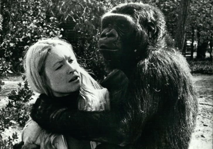 Woman holding Koko the gorilla.