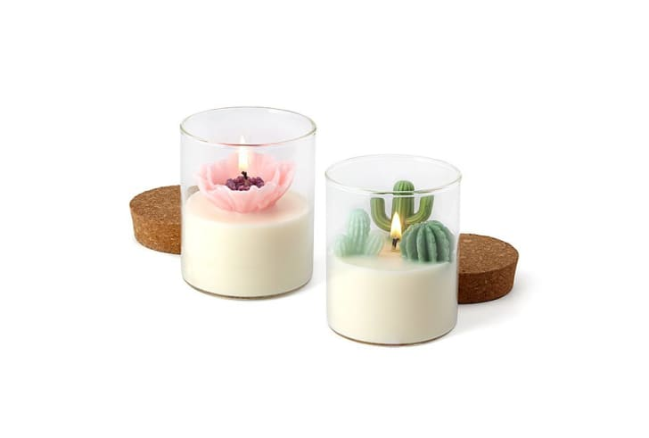 Cactus and poppy terarium candles