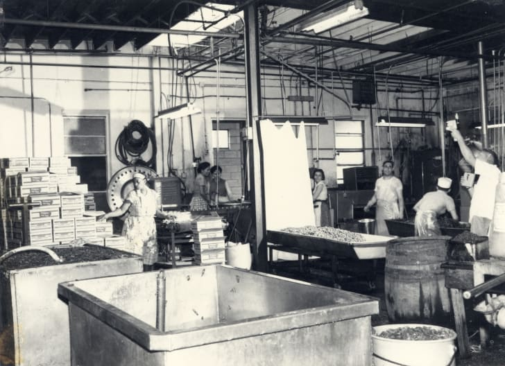 A black-and-white photo of factory workers packing peppers