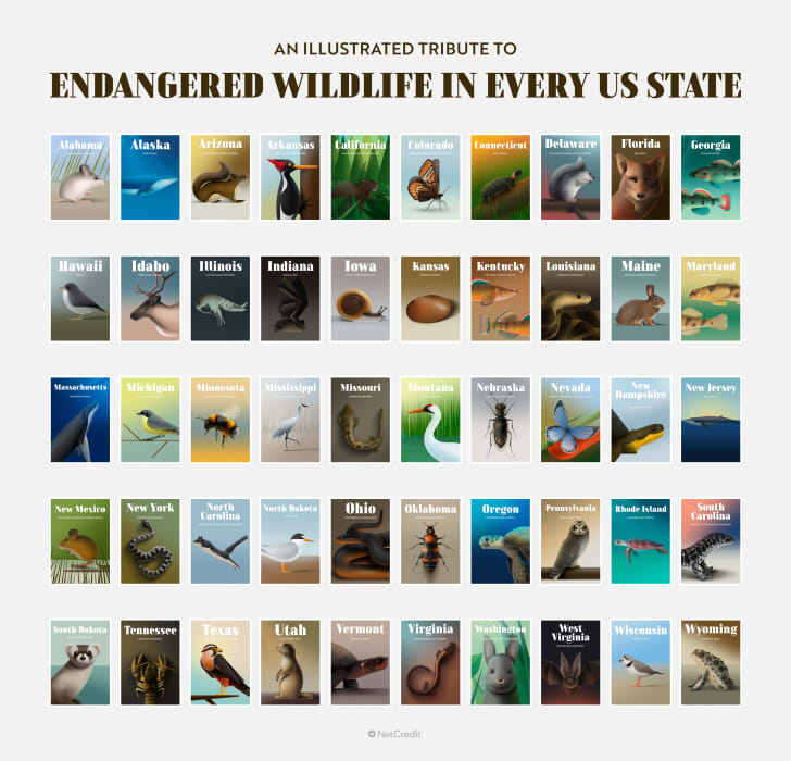 The poster of endangered wildlife in all 50 states