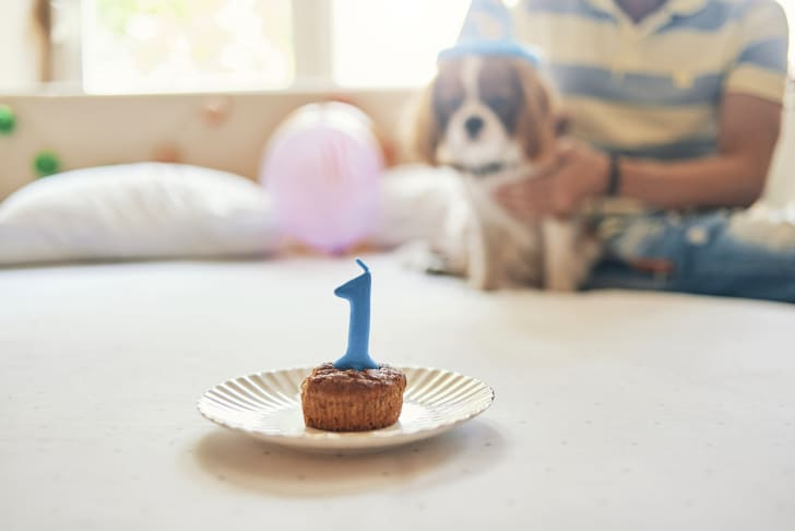 A dog celebrates its 1st birthday