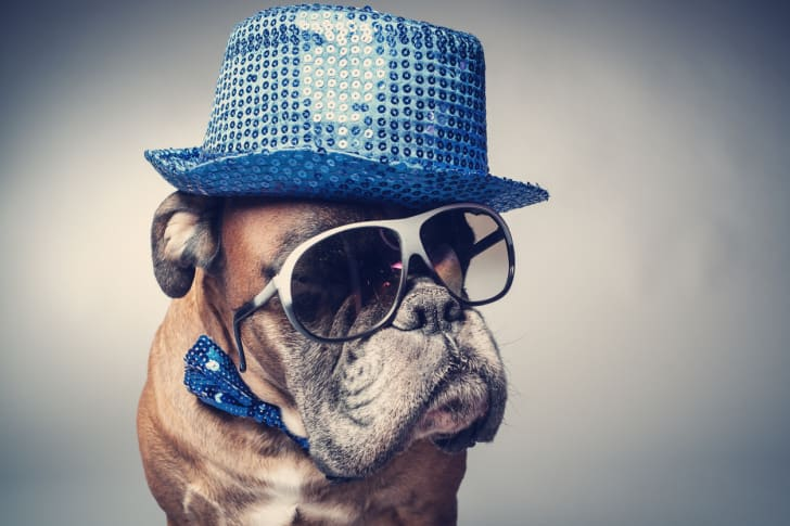 Dog in a sequin fedora and sunglasses