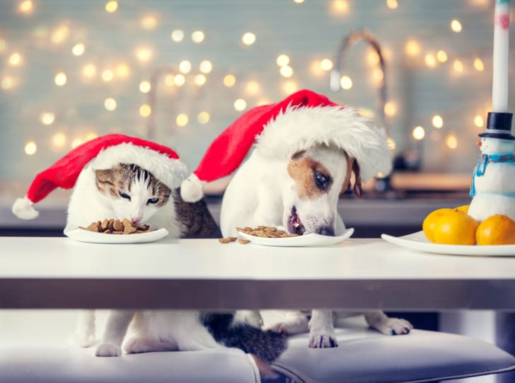 Cat and dog in Santa hats chowing down on plates of food