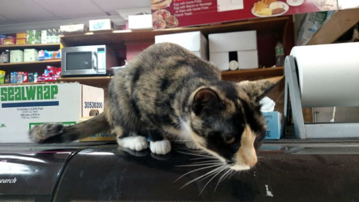 A cat sits on the counter of a bodega
