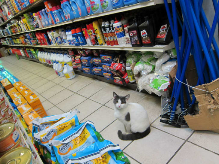 A cat sits in the aisle of a bodega