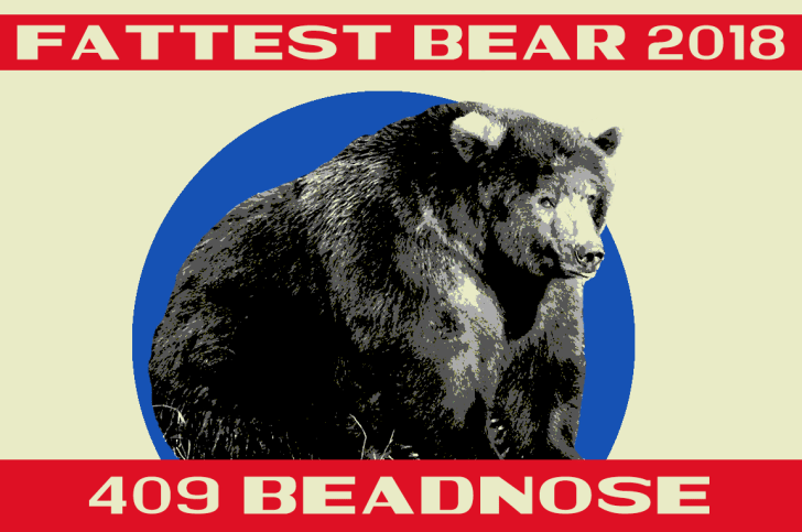 A fat bear contest poster