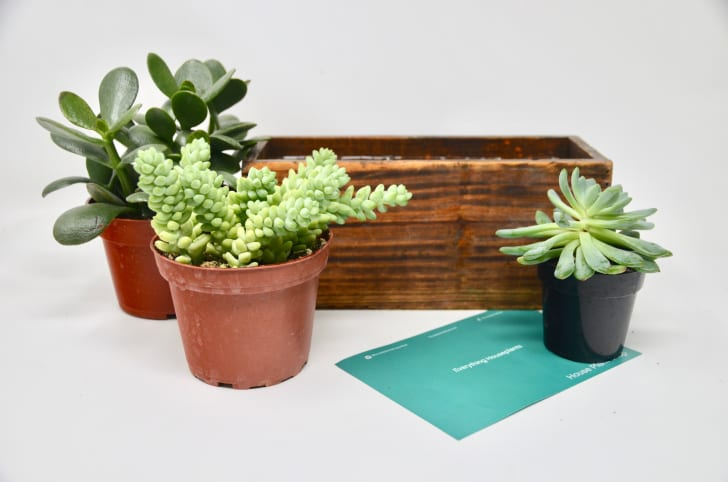 Plants from the succulent House Plant Box subscription option