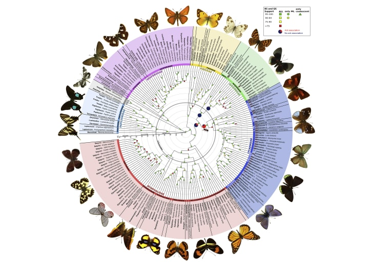 A circular visualization of the butterfly family tree