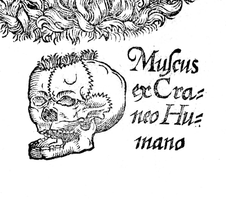 """A 1633 image of skull moss from """"The herball or, generall historie of plantes"""" by John Gerarde"""