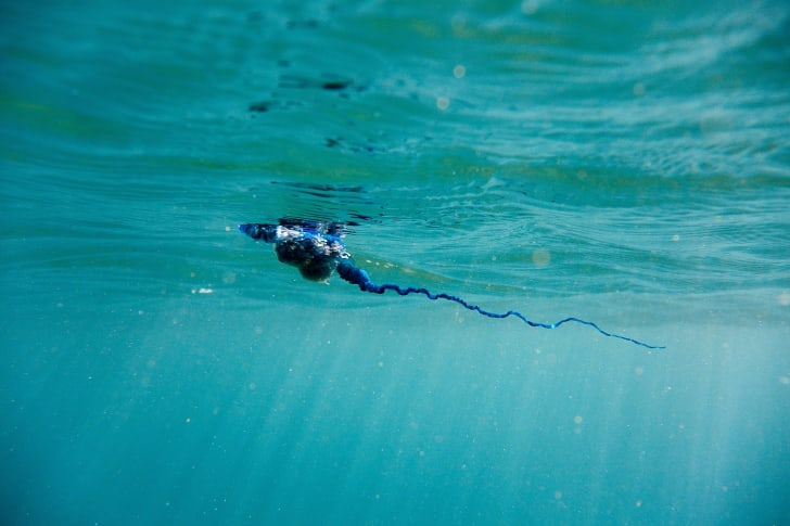 A view of a bluebottle under water.