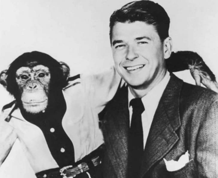 Ronald Reagan poses with Peggy the chimpanzee
