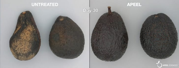 A side-by-side comparison of a coated and uncoated avocado after 30 days, with the uncoated avocado looking spoiled and the coated one looking fresh