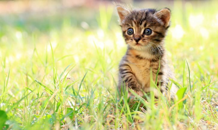 Tiny kitten in grass.