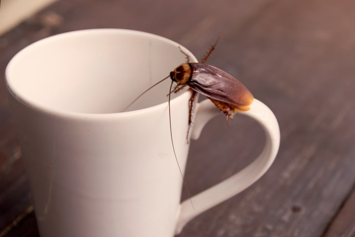 A cockroach on a coffee cup
