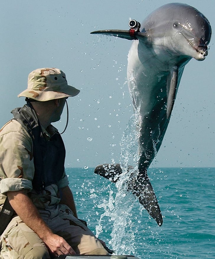 A bottlenose dolphin named K-Dog from the Commander Task Unit jumps out of the water in 2003. Commander Task Unit is comprised of special mine clearing teams from The United Kingdom, Australia, and the U.S.
