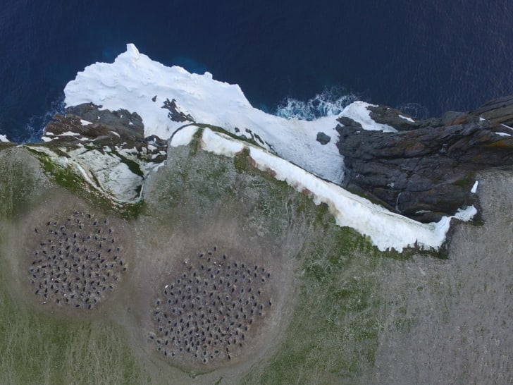 Aerial shot from a quadcopter of penguin populations on Heroina Island.