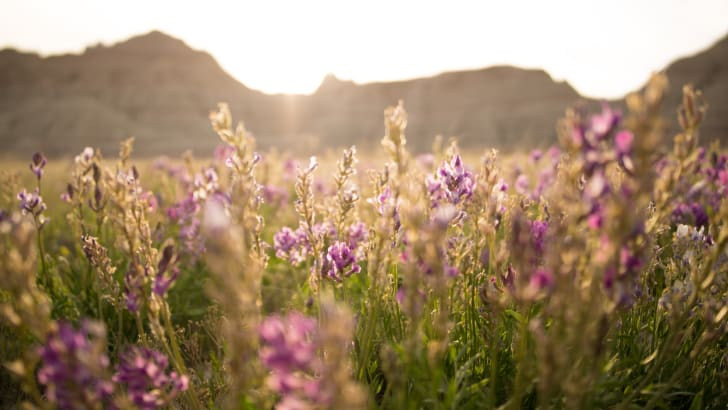 Field of grass and flowers.