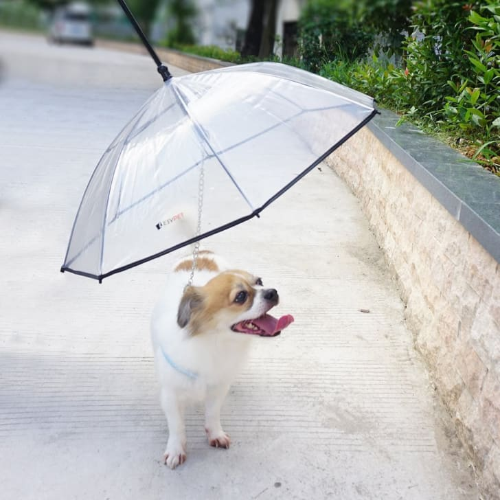 Dog Umbrella With Leash