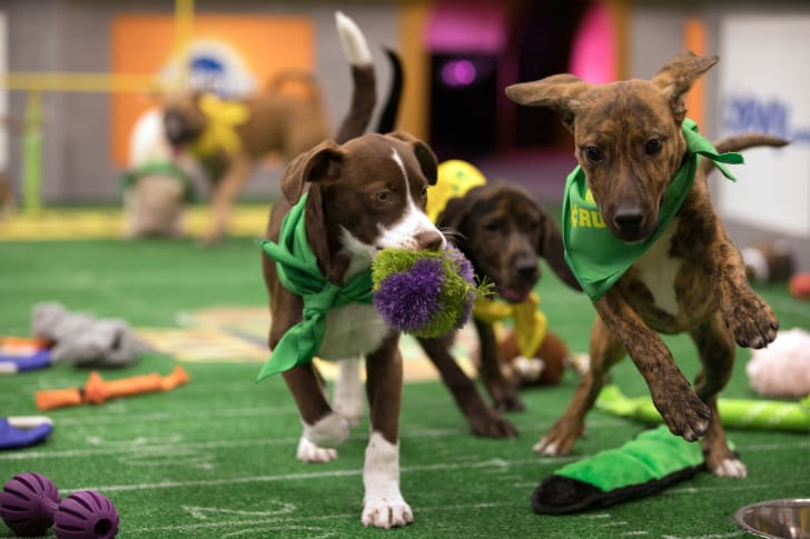 Peanut and Hinesville compete in Puppy Bowl XIV