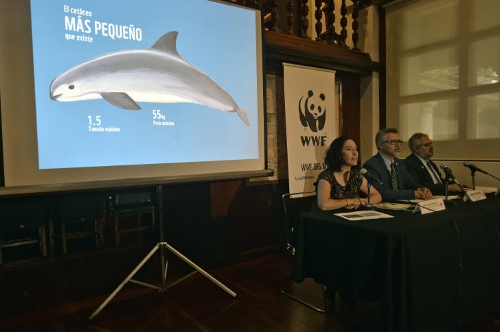 Directors of the World Wide Fund for Nature (WWF) in Mexico Maria Jose Villanueva (L), Jorge Richards (C) and Enrique Sanjurjo speak about the serious situation of the vaquita marina (Phocoena sinus) during a press conference in Mexico City on May 15, 201