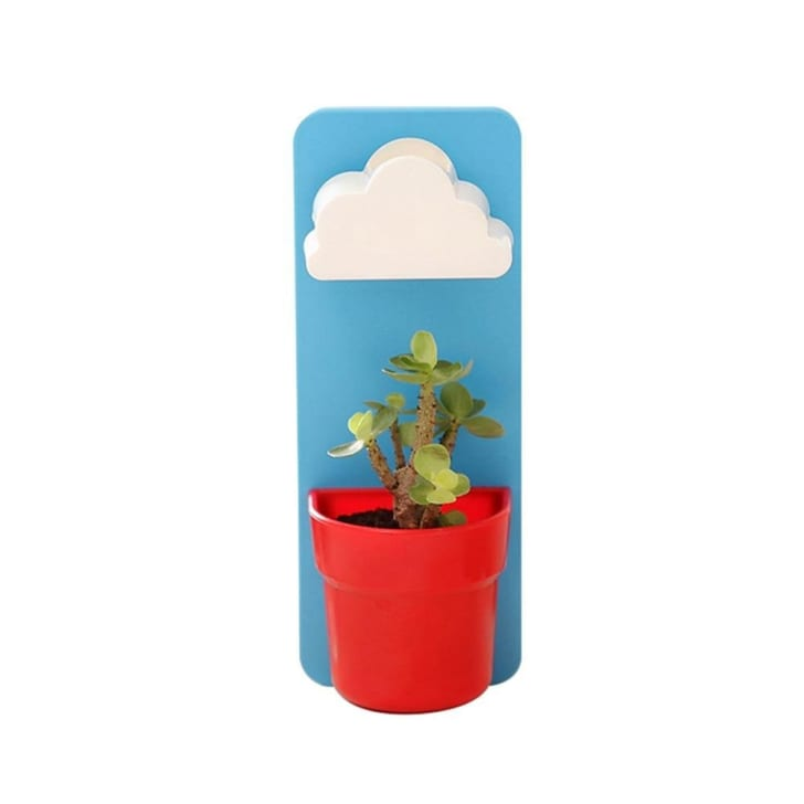 Pawaca New Creative Indoor Wall-Hanging Cloud Rainy Pot With Soil and Seeds As Gifts