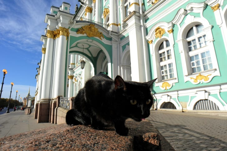 A cat sits in front of Russia's Hermitage Museum