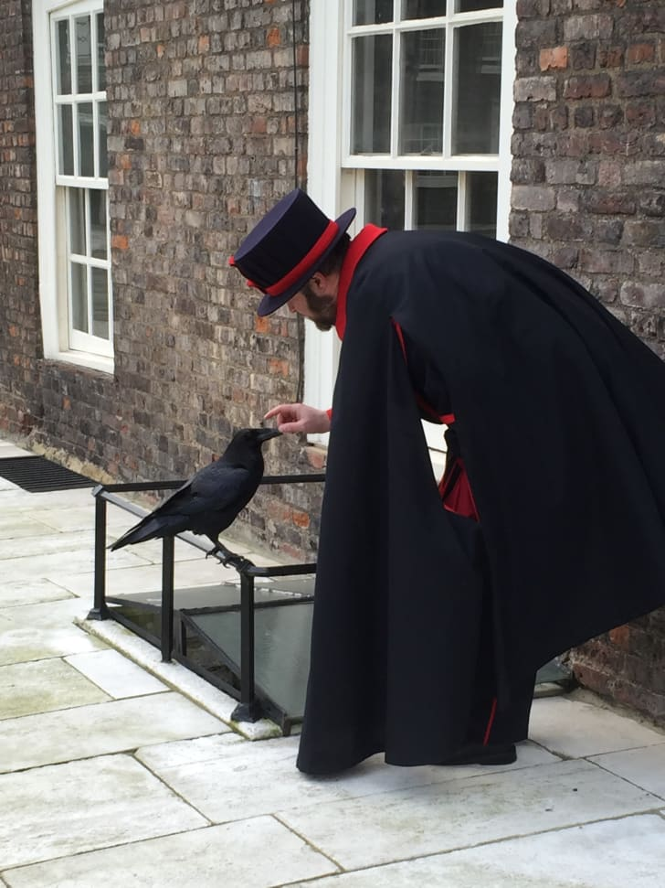 The Ravenmaster at the Tower of London bending down to feed one of his ravens