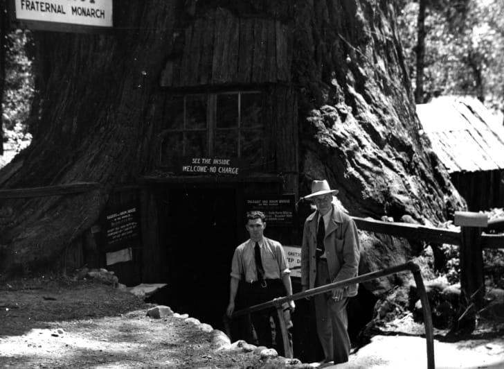"Black and white image of two men standing in front of an enormous tree, with a door with a sign over it that says ""See the inside no charge"" and a hanging sign that proclaims ""Fraternal Monarch."""