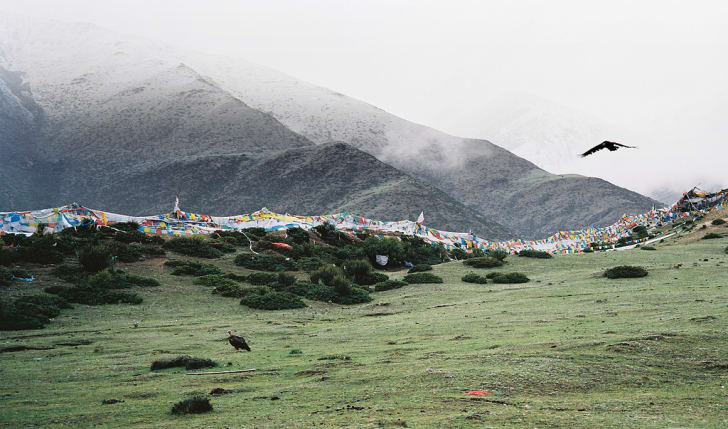 A vulture flying near a sky burial site in Tibet