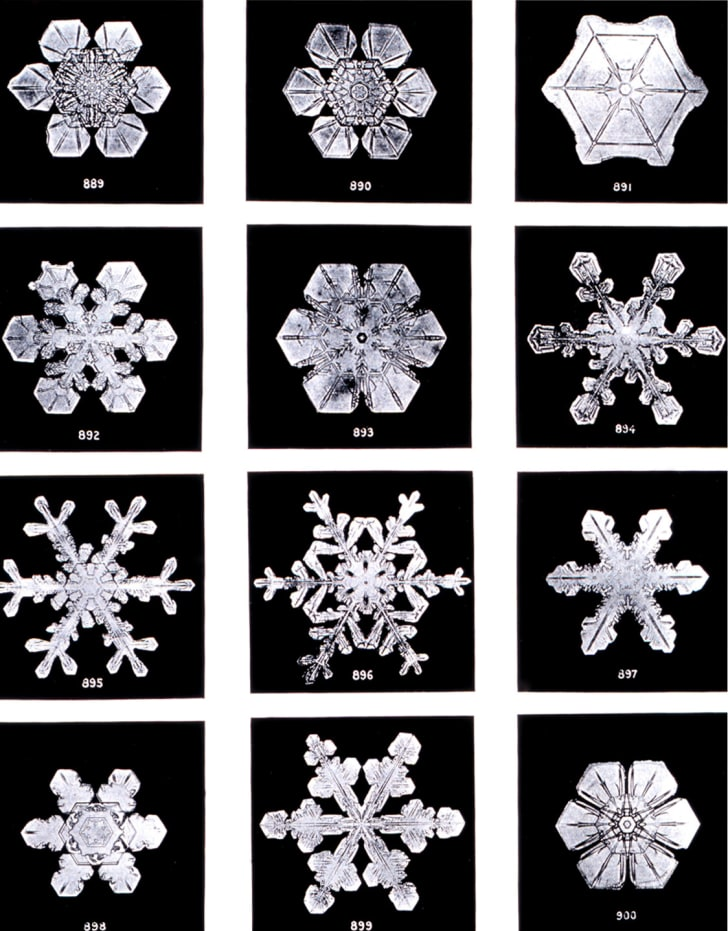 Photo of snowflakes by Wilson A. Bentley