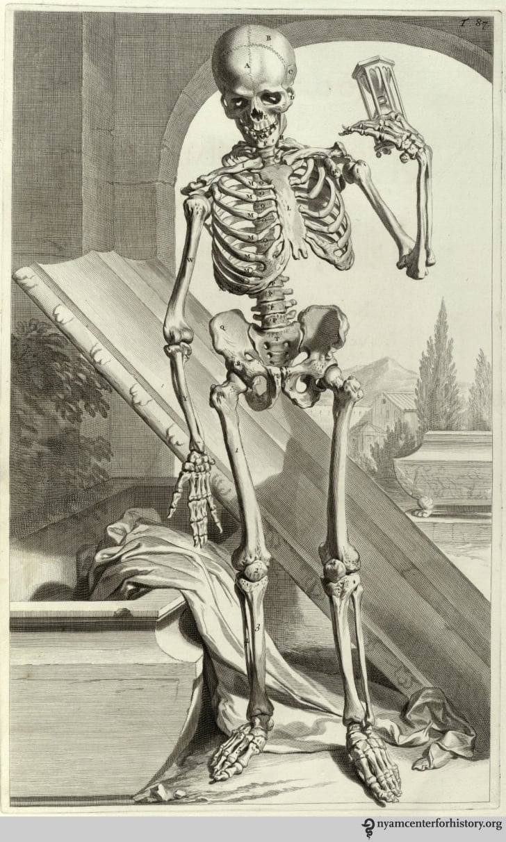 Illustration from William Cowper's The Anatomy of Humane Bodies