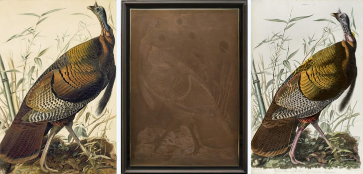A composite photo of John James Audubon's watercolor of a turkey, Lizar's copper engraving of the turkey, and Lizar's hand-colored print.