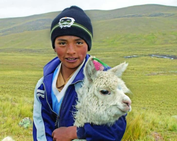 Boy with alpaca in a field.
