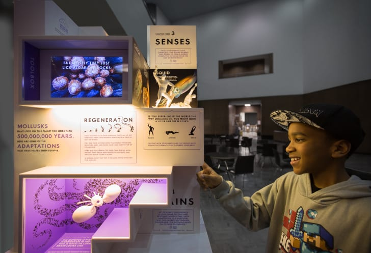 MICRO's Smallest Mollusk Museum at the Brooklyn Public Library