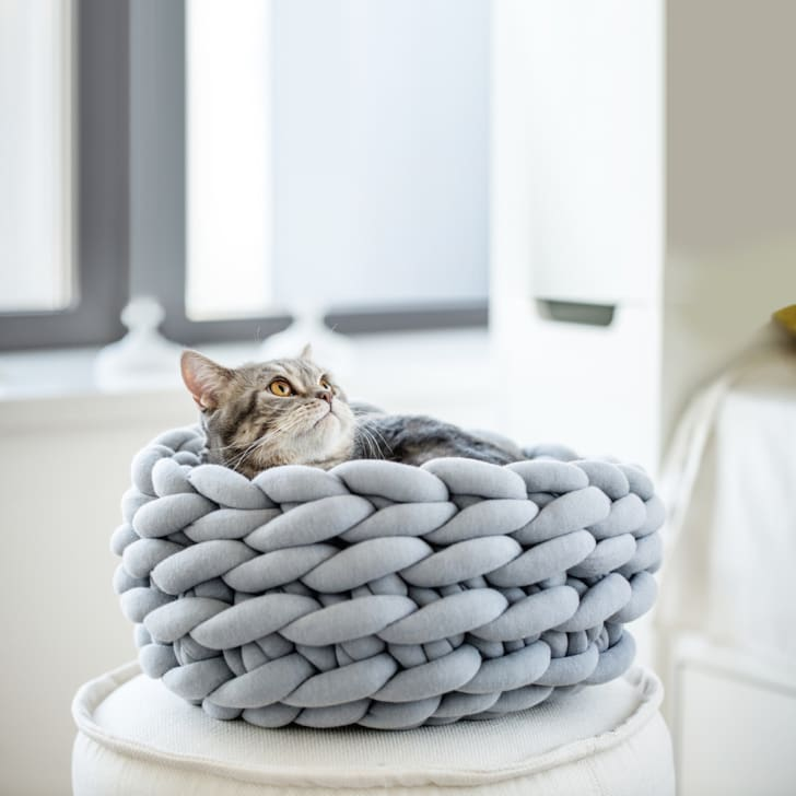 Cat in a knit bed.