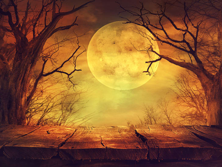 Spooky forest with full orange-colored moon
