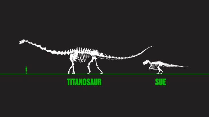 Illustration comparing the size of a titanosaur, a human, and a T. rex.