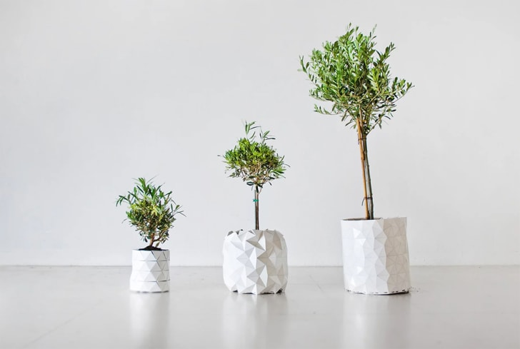 Three plants in white GROWTH planters are placed on the floor.