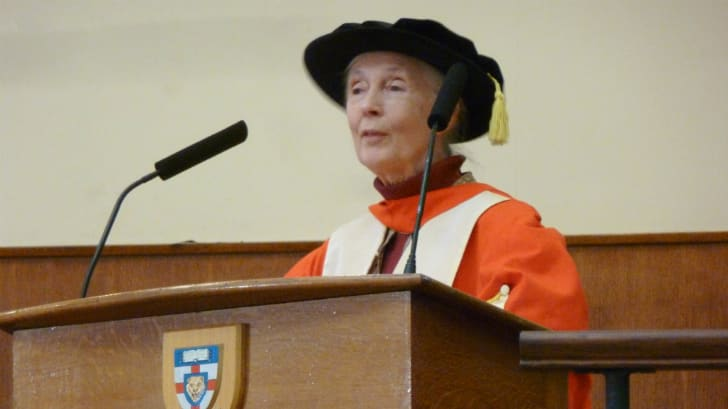 Jane Goodall giving a talk in ceremonial university robes.