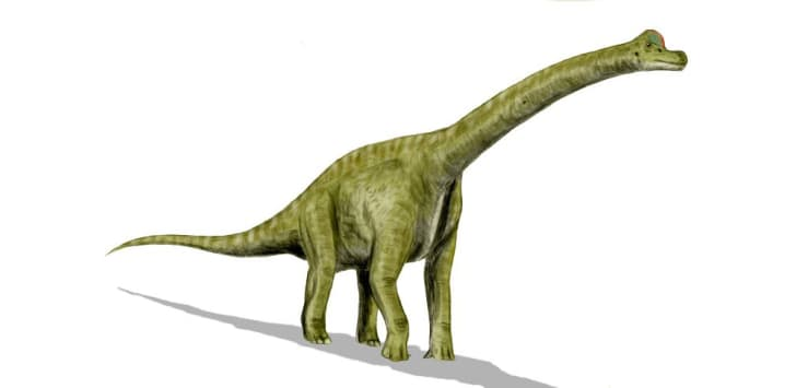 A drawing of a Brachiosaurus.