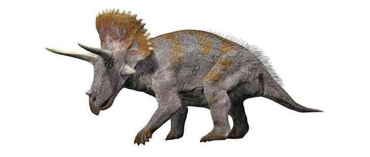 A drawing of a Triceratops.