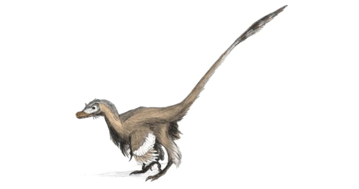 A drawing of a Velociraptor.