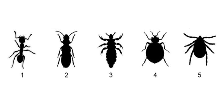 Five different silhouettes of insects