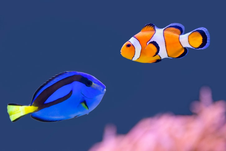 Colorful tropical fish swim in the water