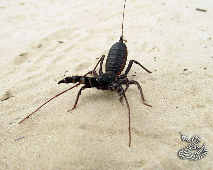 10 Stinging Facts About Scorpions | Mental Floss