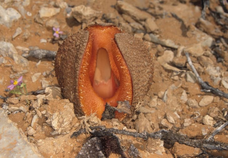 8 of Nature's Smelliest Plants | Mental Floss