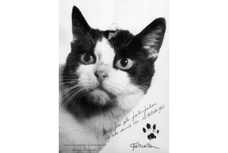 10 Cats Who Were Famous Before the Internet | Mental Floss