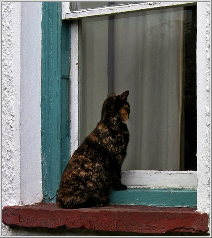 10 Quirky Facts About Manx Cats | Mental Floss