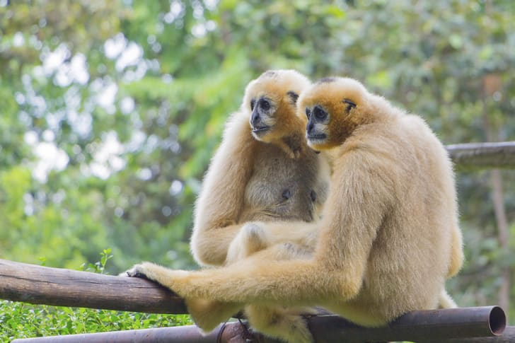 10 Monogamous Animals That Just Want To Settle Down | Mental